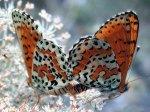 1606borboletas