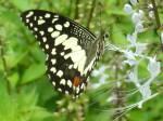 49263-butterflies_screensaver_2007_audio___multimedia_other