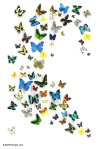 537-large-butterfly-display-big