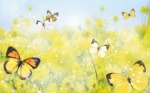 animated_butterfly_wallpaper