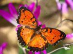 Beautiful-Butterflies-butterflies-9481976-1600-1200