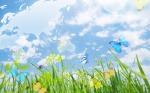 beautiful-butterflies-wallpapers_13863_1920x1200