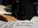 big black rose by minsk