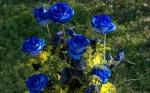 blue.roses.garden.17081974_f