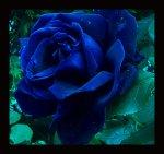 Blue_by_diamondsTwinkle18