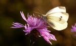 borboleta.ritagliata un'attimo giusta