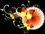 borboletas.fundo.preto