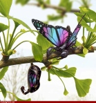 Butterflies-hehe29310