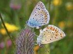 butterfly-055