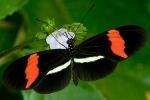 ButterflyGene_1002xx_01_Courtesyof_hr1200x800