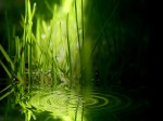 รูปภาพธรรมชาติ.greenwallpaper.bamboo.agua.water.bambu.wallpaper