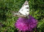 farfalla.bw