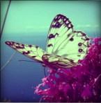 farfalle-in-volo-pola