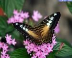 farfalle_45