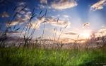 field.รูปภาพธรรมชาติ