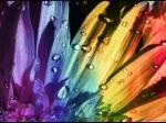 Floral_Rainbow_by_Swaroop