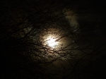 forest-dream-paranormal-moon-trees
