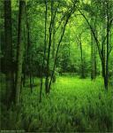 GREEN_FOREST_รูปภาพธรรมชาติ