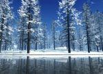 harika-manzara_cold.landscape.trees.snow.arvores.neve.frio.gelo.paisagem.gelada.paysage.froid.neige.arbres.alberi.hiver.winter.inverno