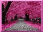 manzara resimleri.pinklandscape.paisagemrosa.paysajerosa.paysagerose