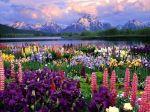 manzararesmi.flores.fleurs.fiori.flowers.lake.mountain.lago.montanha.lac.montagne.montagna