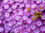 Papel-de-Parede-Flores
