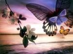 Papel-de-Parede-Sonho-das-borboletas_1280x960 (1)