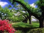 PicsDesktop_paisagem.paysage.paisaje.paysaje.landscape.manzara resimleri.arvore.tree.trees.albero.alberi.arbre