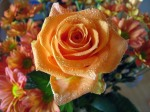 rosa.salmon.rosa.samao.roses-wallpaper-roses-bouquets4426