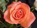 Rosa-tijolo-II
