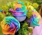rosas.multicoloridas