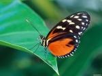 wallpaper.butterfly