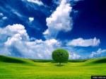 wallpaper_tree.arvore.albero.arbre.field.campo